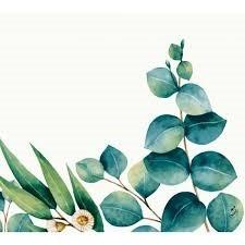 Ubrousek 40x40 Dsoft Eucalyptus 60ks